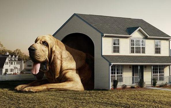 哈多利生态狗屋原创设计制造室外系列Ho07