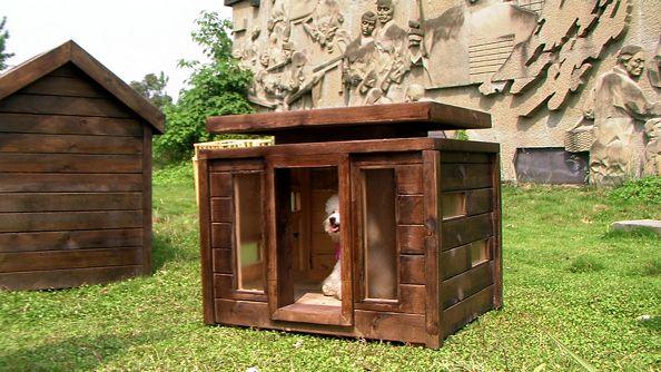 哈多利生态狗屋原创设计制造室内系列Hi03