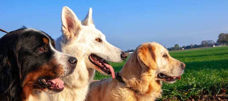top-50-dog-breeds-in-the-world.jpg