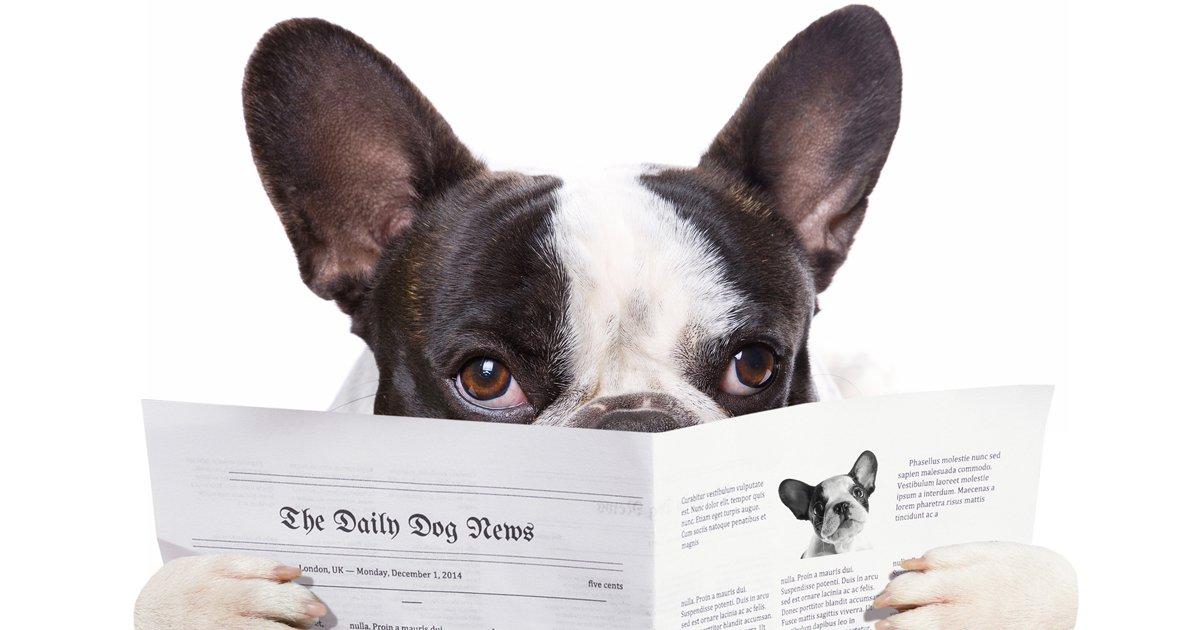 China-Pet-Industry-News.jpg